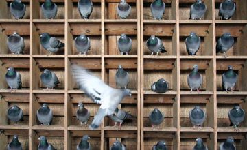 Never pigeonhole yourself